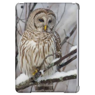 Barred Owl with a light snowfall