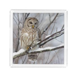 Barred Owl with a light snowfall Acrylic Tray