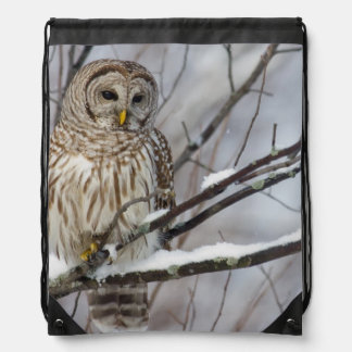 Barred Owl with a light snowfall Drawstring Bag