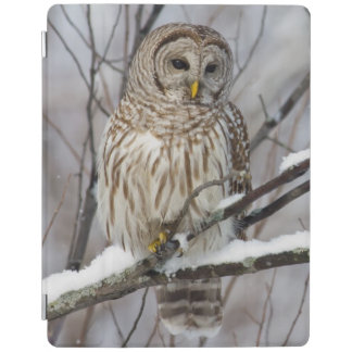 Barred Owl with a light snowfall iPad Cover