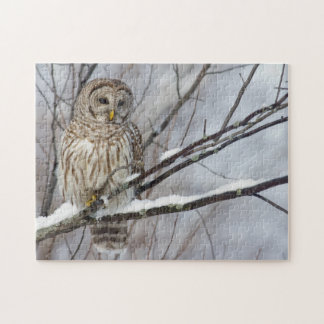Barred Owl with a light snowfall Jigsaw Puzzle