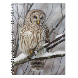 Barred Owl with a light snowfall Spiral Notebook