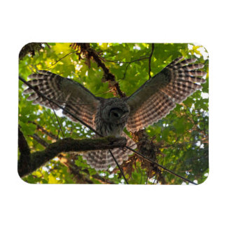 Barred Owl with Wings Outstretched Magnet