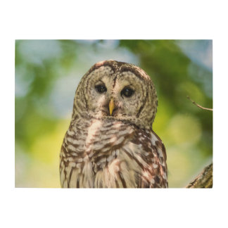 Barred Owl Wood Canvas
