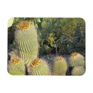 Barrel Cacti Magnet