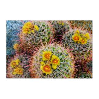 Barrel cactus close up, California Acrylic Wall Art