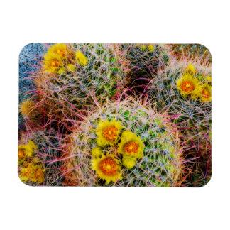 Barrel cactus close up, California Rectangular Photo Magnet