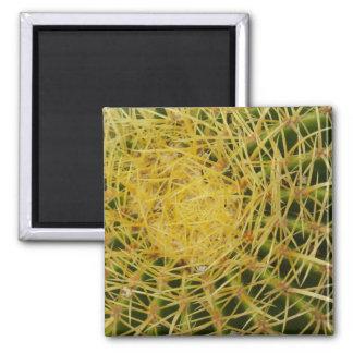 Barrel Cactus Closeup Nature Pattern Photo Square Magnet