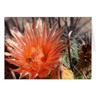Barrel Cactus Greeting Card