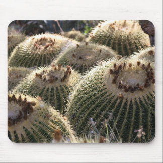 Barrel Cactus in Early Morning Light Mouse Pad
