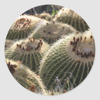 Barrel Cactus in Early Morning Light Round Stickers