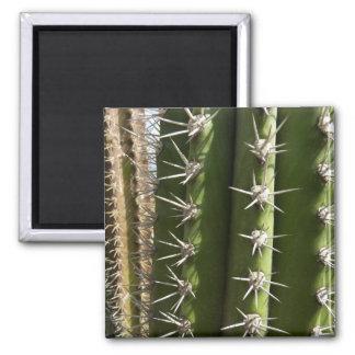 Barrel Cactus Magnet