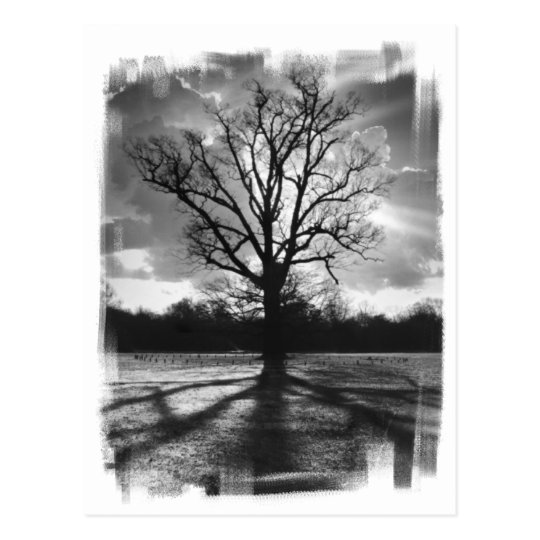 Barren Branches Tree Postcard