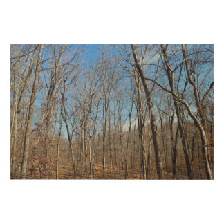 Barren Forest Trees Wood Print