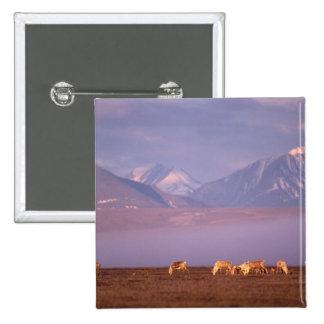 Barren ground caribou, Porcupine herd on calving 15 Cm Square Badge