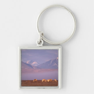 Barren ground caribou, Porcupine herd on calving Silver-Colored Square Key Ring