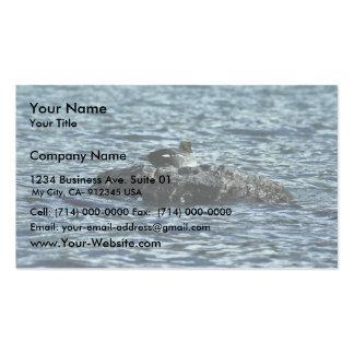 Barrow's Goldeneye Pack Of Standard Business Cards