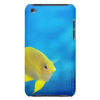 Bartlett's anthias Case-Mate iPod touch case