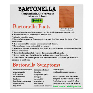 Bartonella Information Fact Sheet Poster