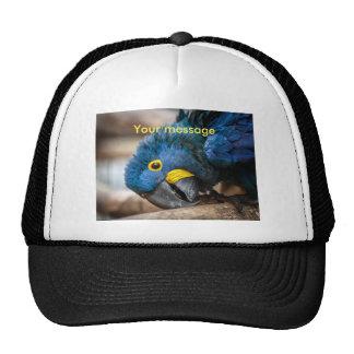 Baseball cap featuring cute Hyacinth Macaw parrot