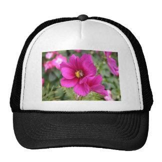 Baseball hat Pink Cosmos with a wasp