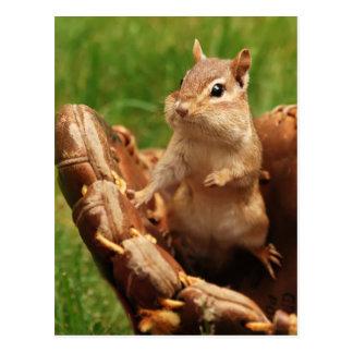 Baseball Loving Chipmunk Postcard