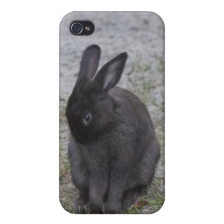 Bashful Bunny Rabbit iPhone 4 Cover