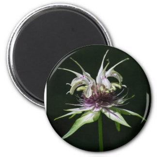 Basil Bee Balm Bergamot Wildflower Round Magnet