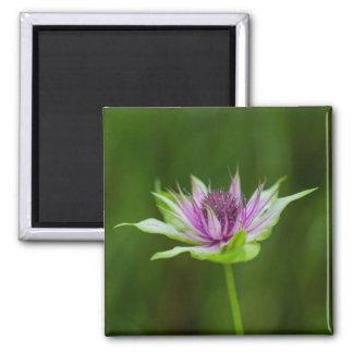 Basil Bee Balm Bergamot Wildflower Square Magnet