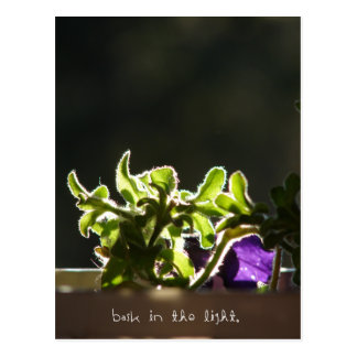 Bask in the Light Postcard