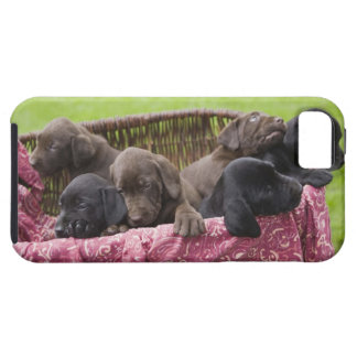 Basket of labrador retriever puppies iPhone 5 cases