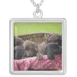 Basket of labrador retriever puppies silver plated necklace
