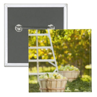 Baskets of apples in orchard 15 cm square badge