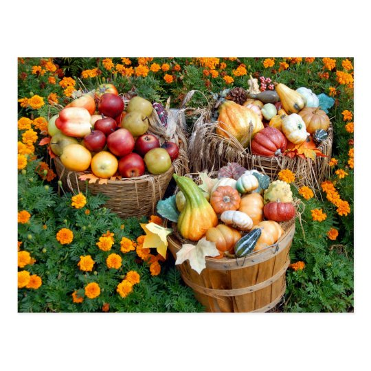 Baskets of Autumn Fruit and Vegetables Postcard