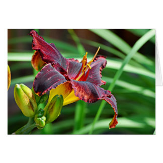 Basking Day Lily Card