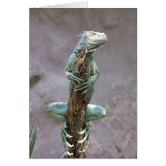 Basking Iguana Card