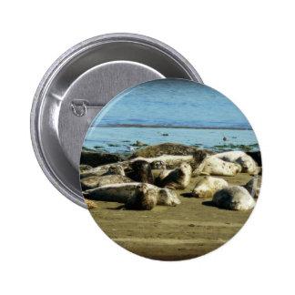 Basking Seals Button