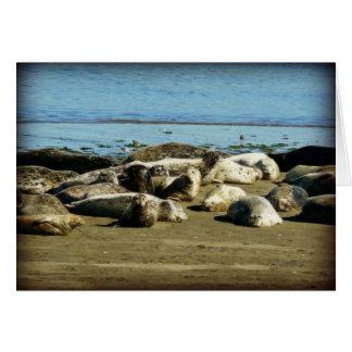 Basking Seals Greeting Cards