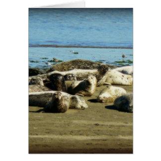 Basking Seals Greeting Card