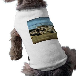 Basking Seals Pet T Shirt