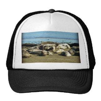 Basking Seals Trucker Hats