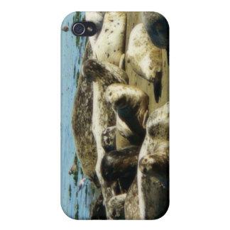 Basking Seals iPhone 4 Case