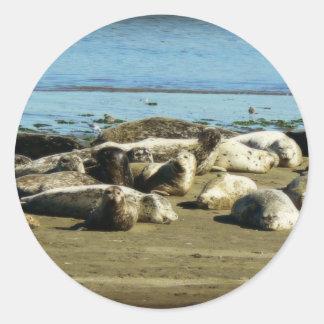 Basking Seals Round Sticker