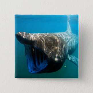 Basking shark 15 cm square badge