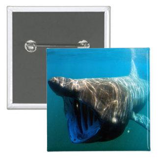 Basking shark 15 cm square badge