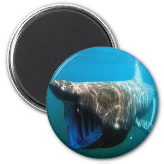 Basking shark 6 cm round magnet