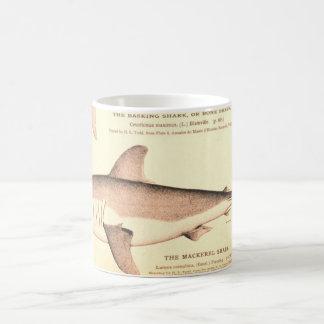 Basking Shark and Mackerel Shark Basic White Mug