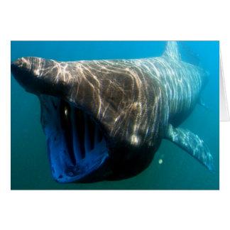 Basking shark cards