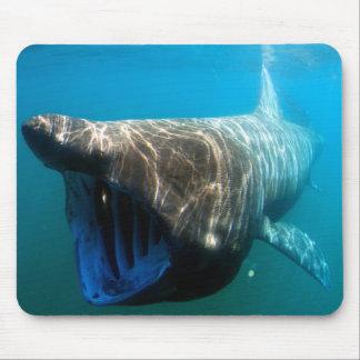 Basking shark mousepads
