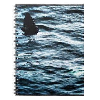 Basking shark notebooks
